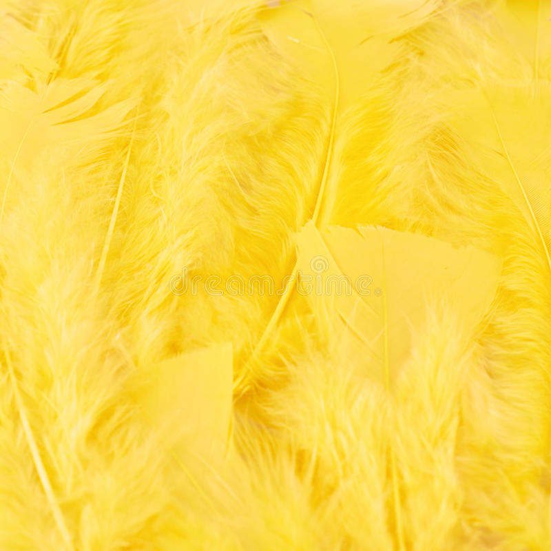 Yellow feathers composition. Surface covered with yellow feathers as a background texture composition stock images