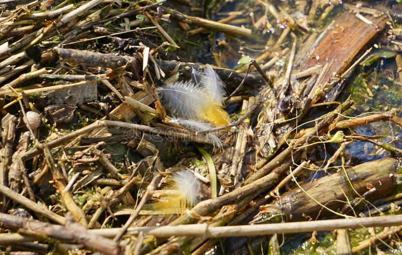 Yellow feathers among debris stock images