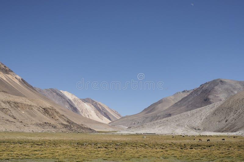 Yellow feild & the sky. Leh Ladahk stock photos