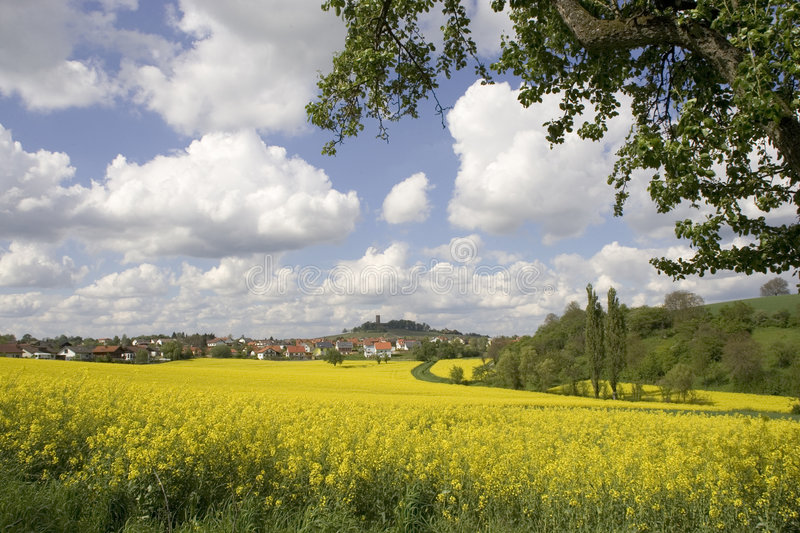 Yellow field of flowers stock photography