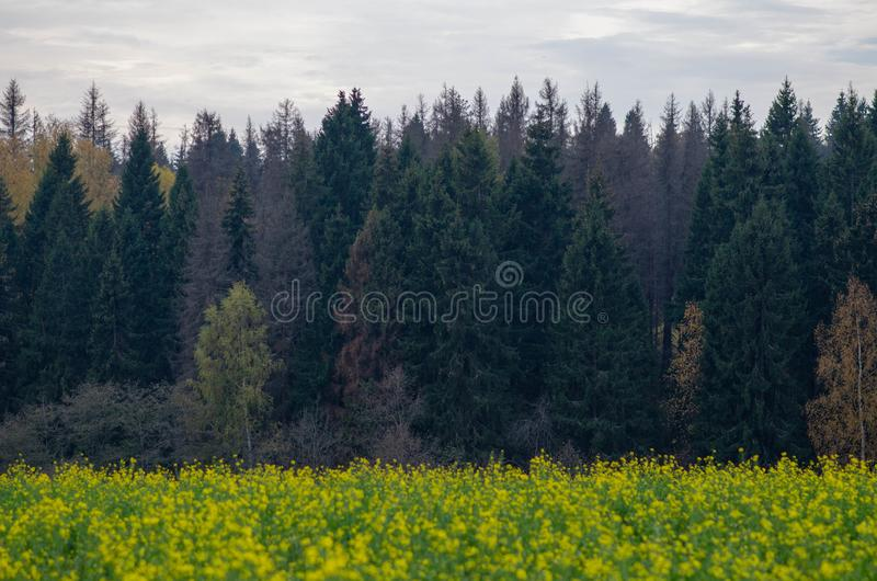 Yellow field and forest, clouds in autumn royalty free stock photos