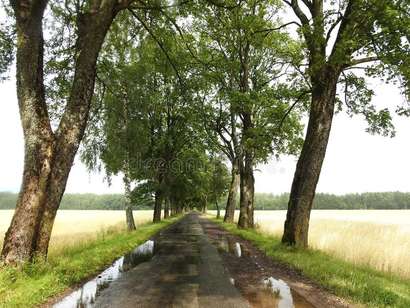 Field, old tree and way after rain, Lithuania royalty free stock photography
