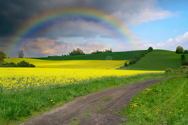 Yellow Field In Bloom With Sky And Rainbow Stock Photos