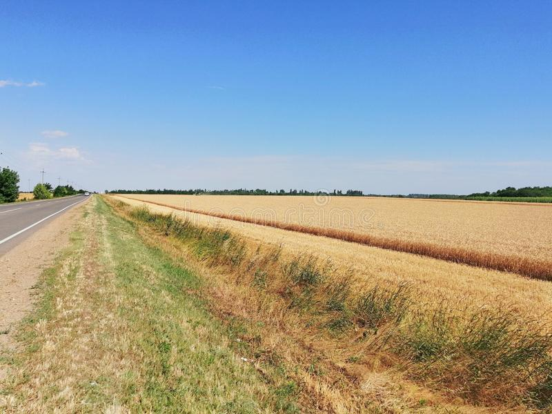 Wheat field and the road on a hot summer day stock photos