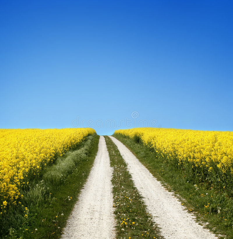 Free Yellow Field With Oil Seed In Early Spring Stock Photo - 5247360