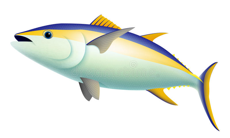 Yellow Fin Tuna Fish royalty free illustration