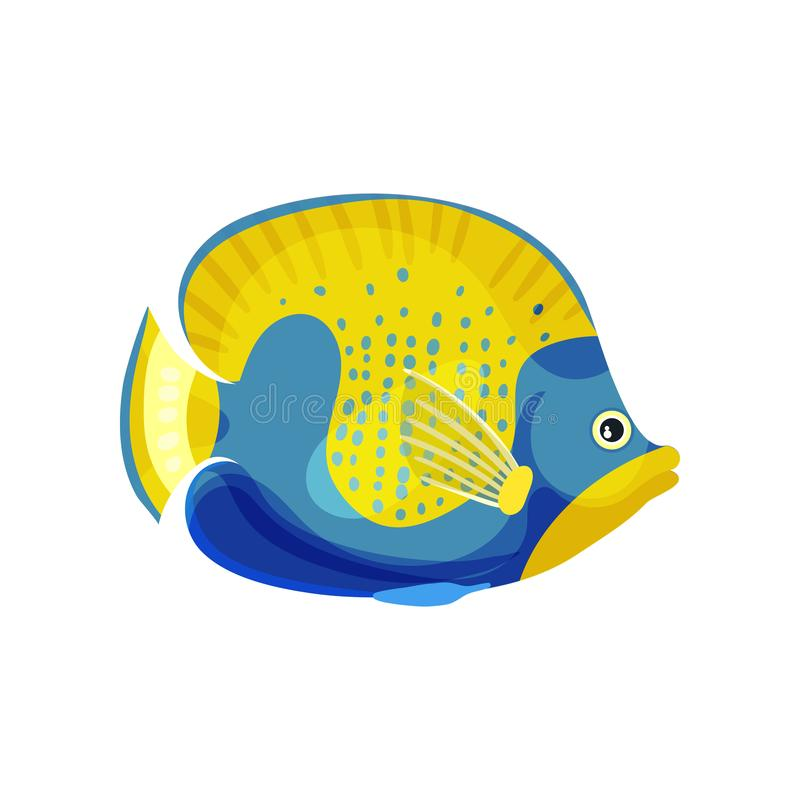 Yellow fish with blue head and belly. Vector illustration on white background. Yellow fish with a transparent fin and with a blue head, belly and points on its stock illustration