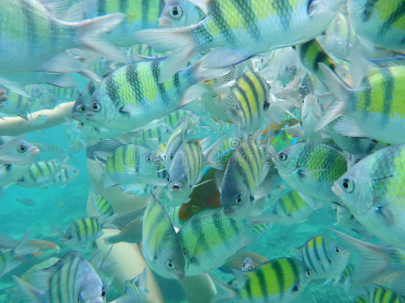 Download Yellow Fish Under Water Royalty Free Stock Image - Image: 35533606