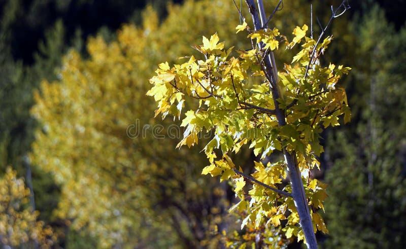 Yellow, Flora, Tree, Plant stock photography