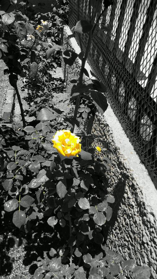 Yellow stock photography