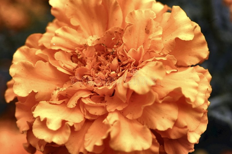 Download Yellow flower stock photo. Image of closeup, yellow, beautiful - 102626