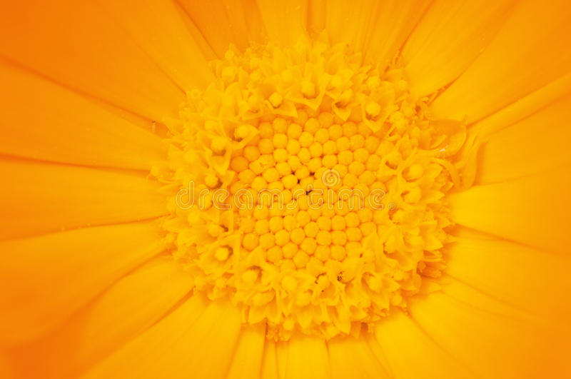 Download Yellow flower stock photo. Image of background, bright - 13158996