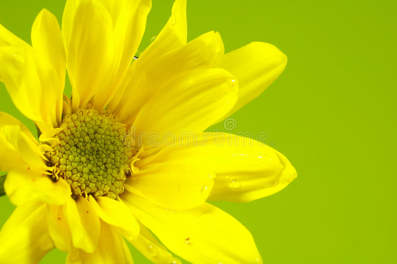 Download Yellow Flower stock image. Image of petal, summer, pollen - 165497