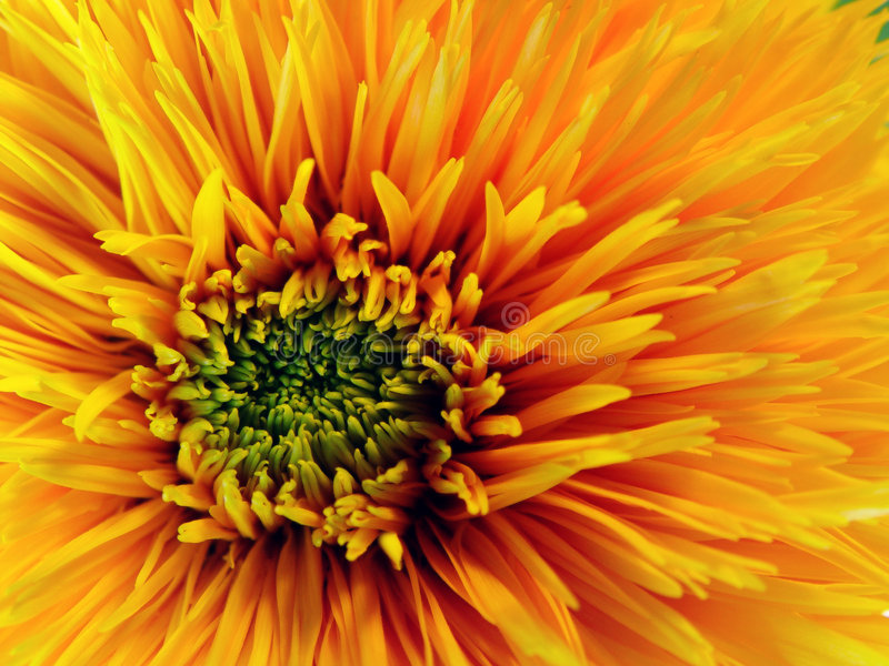 Download Yellow Flower Royalty Free Stock Photography - Image: 19377