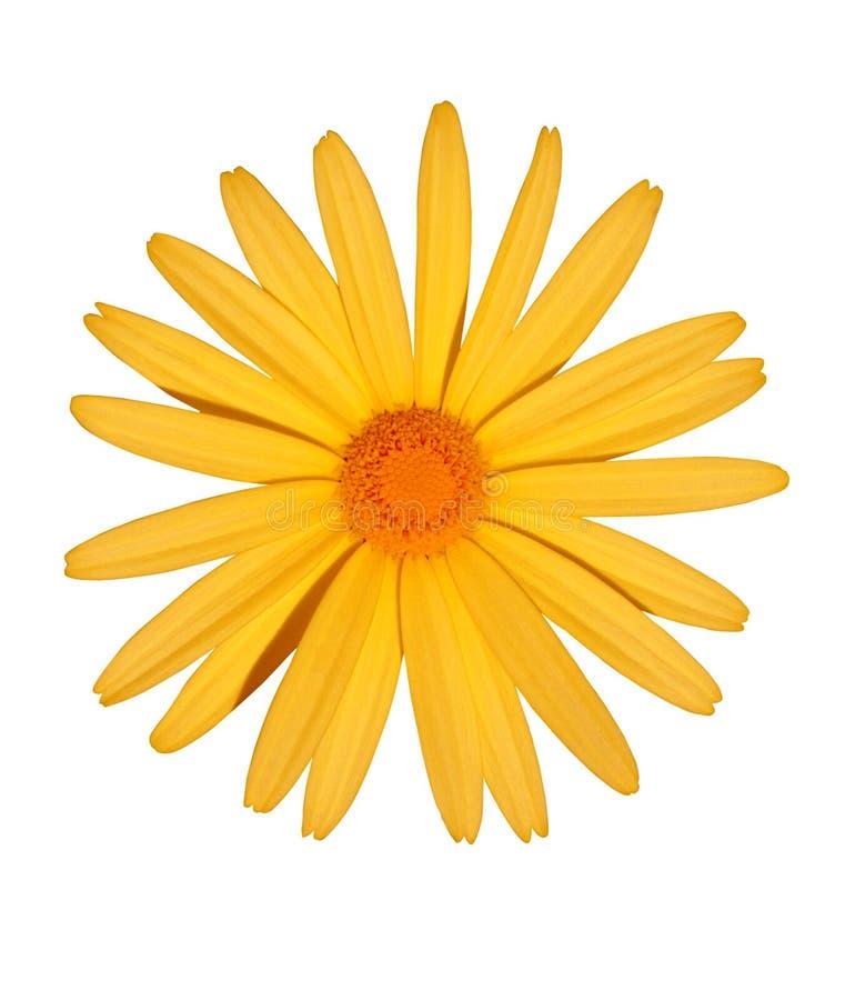 Free Yellow Flower Royalty Free Stock Photos - 236288