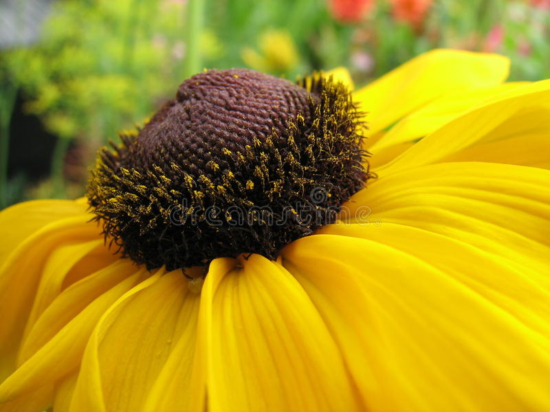 Download Yellow flower stock photo. Image of flower, detail, macro - 27067944