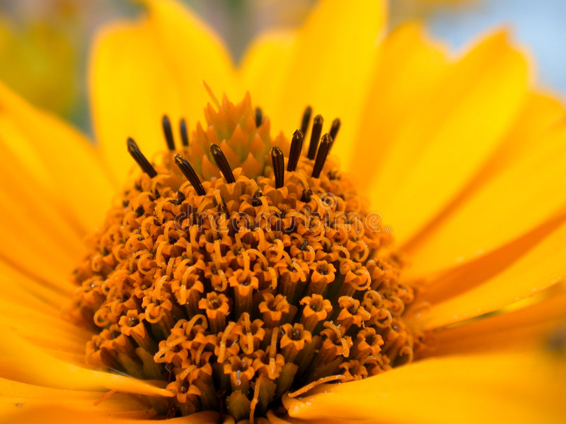 Download Yellow flower stock image. Image of elegant, flowering - 2986295