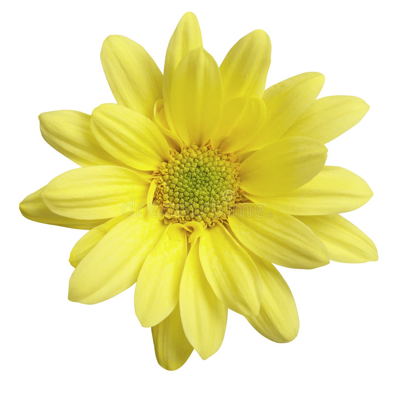 Free Yellow Flower Stock Image - 3829551
