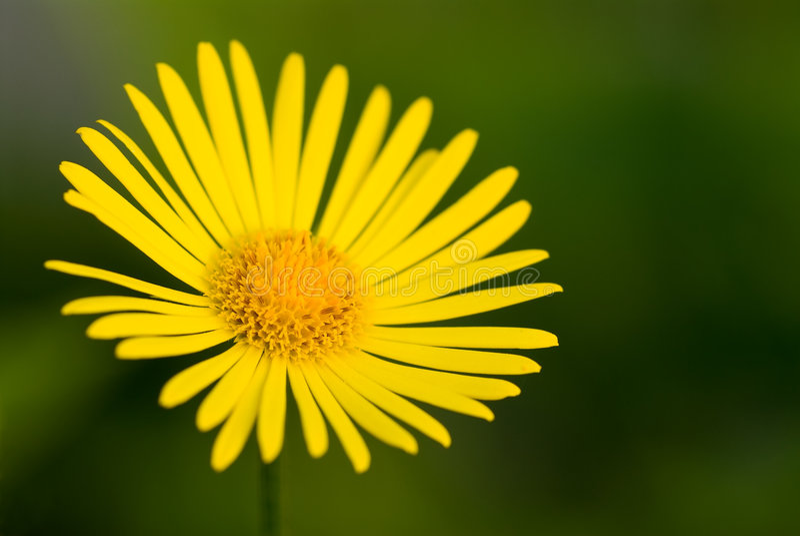 Download Yellow flower stock image. Image of bloom, pollen, stigma - 5360459