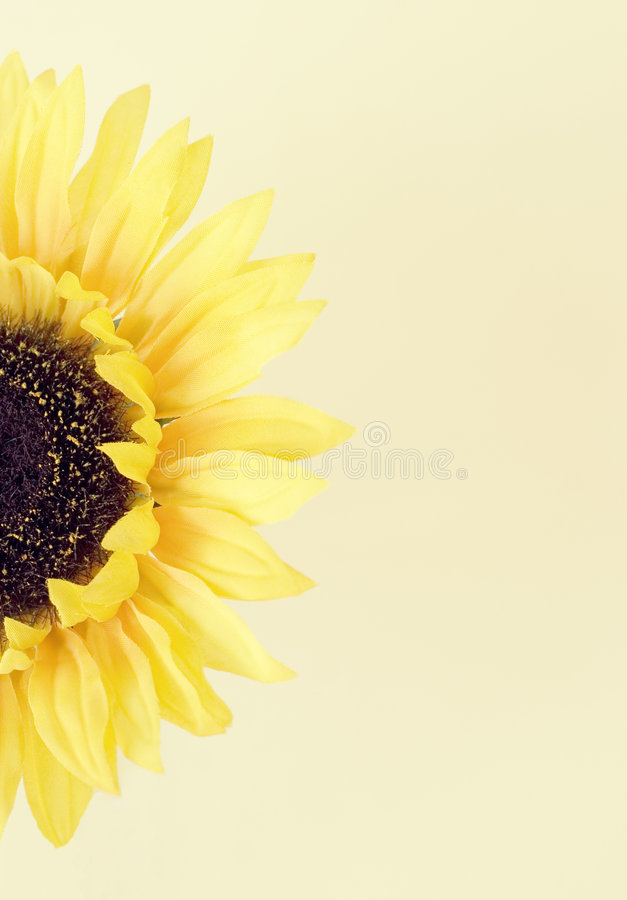 Yellow flower 6. Yellow flower against a tan background royalty free stock image