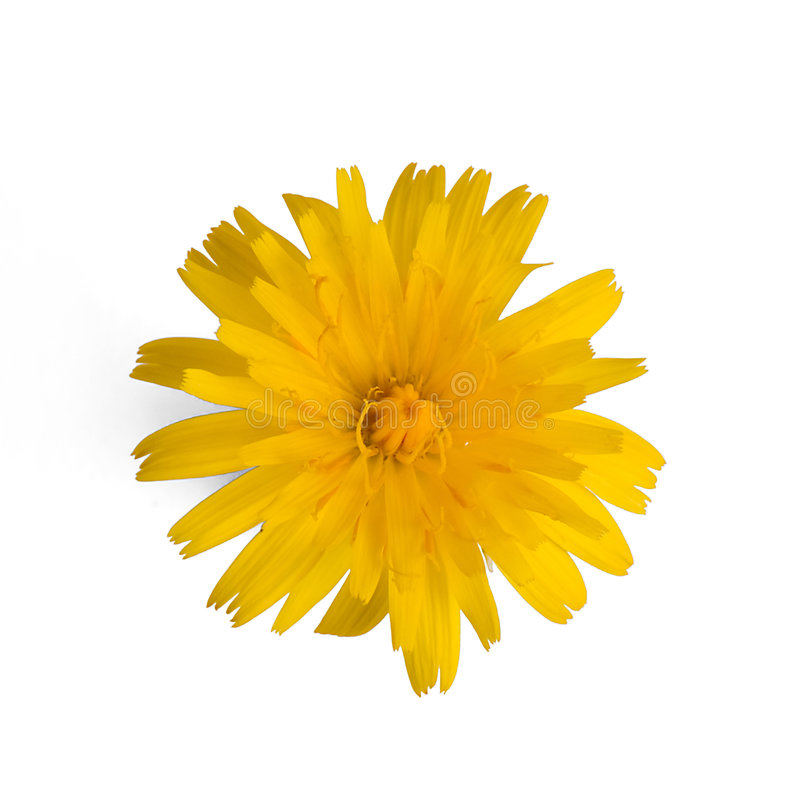 Download Yellow Flower Stock Images - Image: 7635094