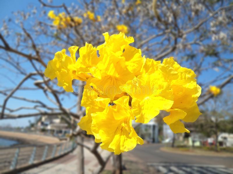 Yellow flower, autumn day. stock photo