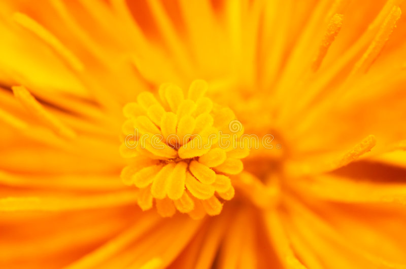 Yellow flower background stock image