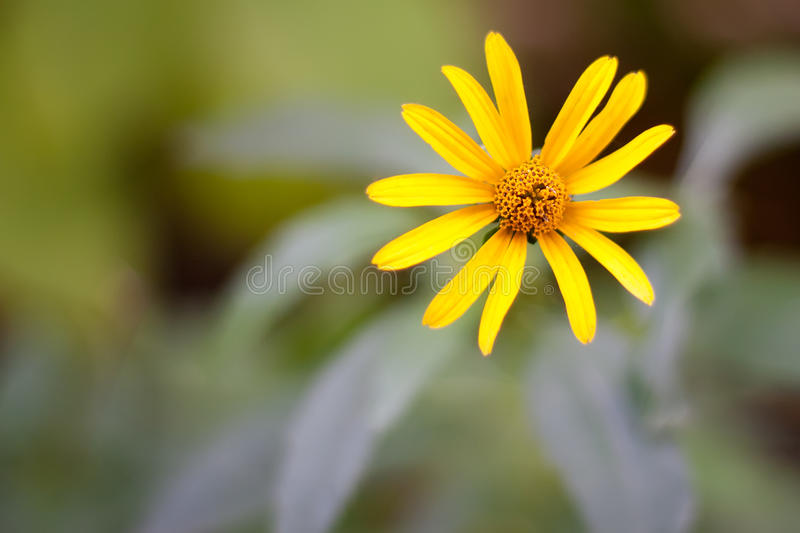 Yellow flower. On a flower background with boke stock photo