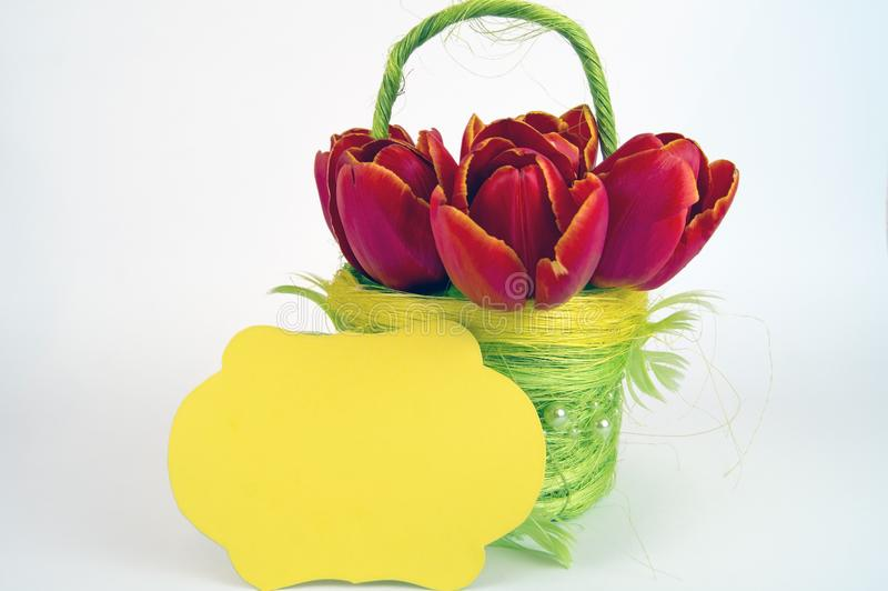 Yellow flower basket with red tulips royalty free stock image