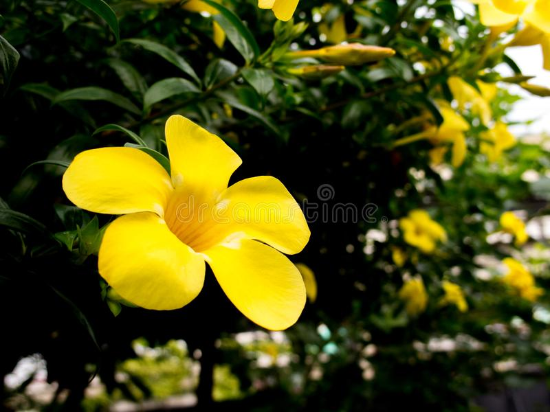 Yellow Flower on black background stock images