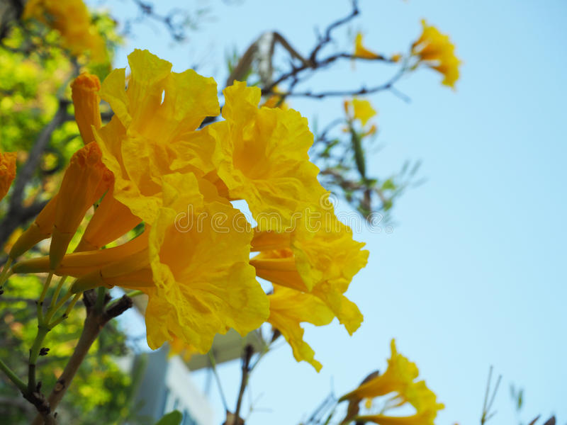 Yellow Flower in Blue Sky stock image