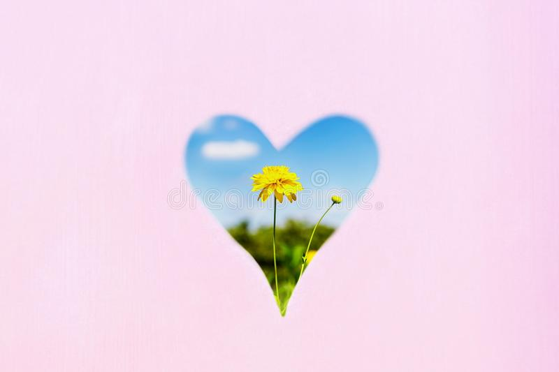 Yellow flower and blue sky in heart shape. Pastel background, copy space. Love summer concept. Bright yellow flower and blue sky in heart shape. Pastel stock photos