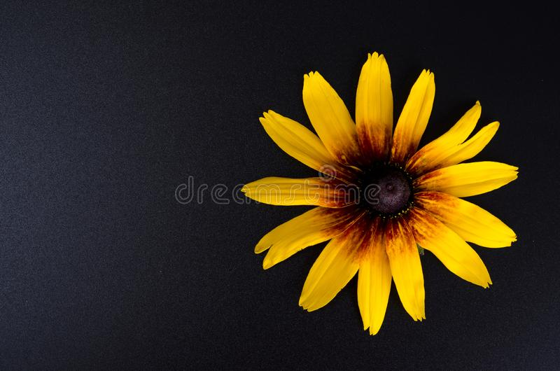 Yellow flower on bright paper background. Photo. Yellow flower on bright paper background. Studio Photo stock image