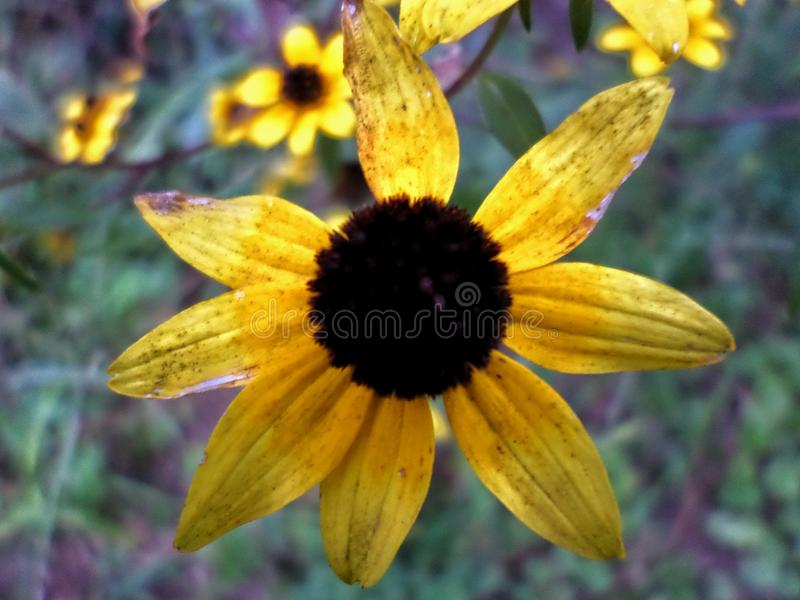 Yellow flower in the Fall time stock photography