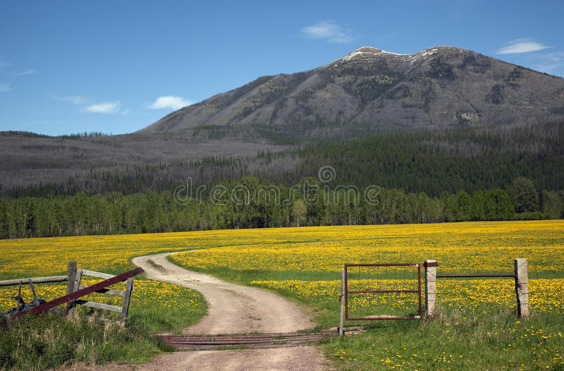 Download Yellow Flower Farm Road Fence Countryside Montana Stock Image - Image: 10999017
