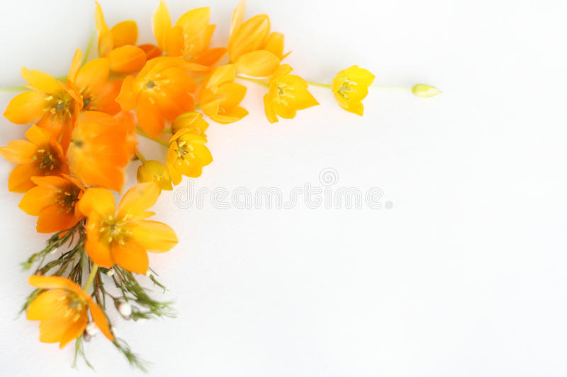 Yellow flower frame royalty free stock photo