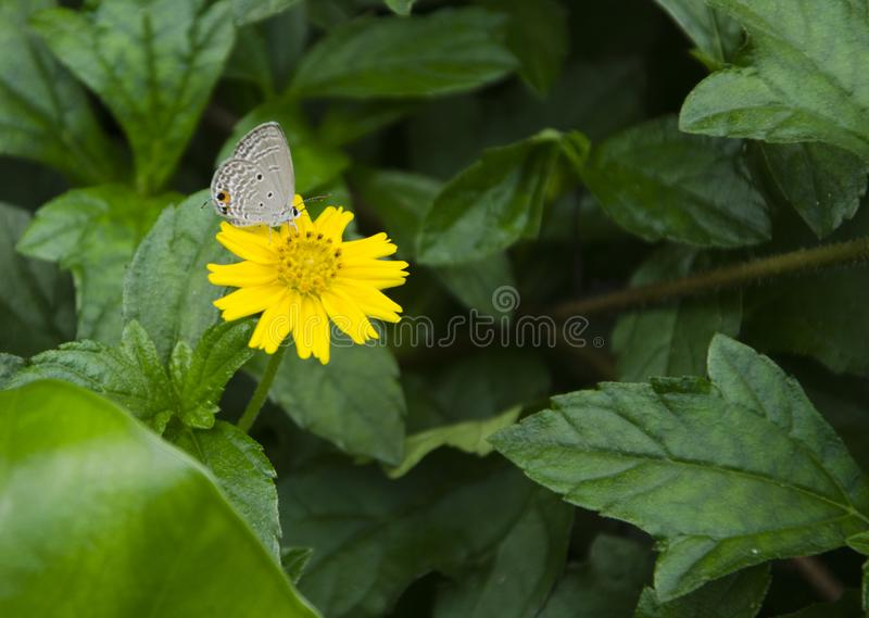 Yellow flower in garden stock photography