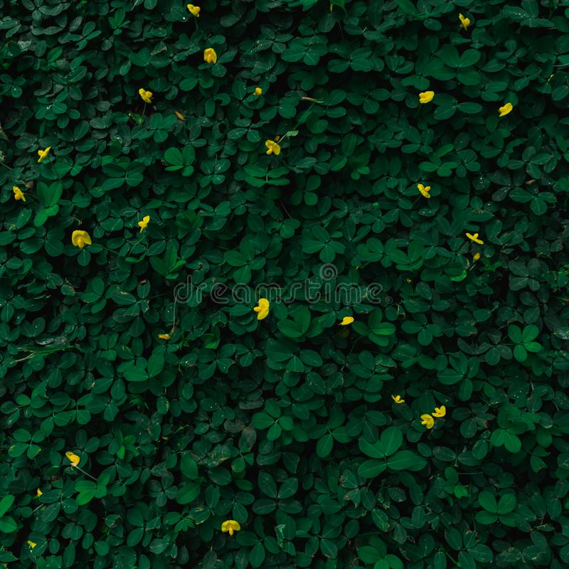 Yellow flower and green leaves background with retro colour tone royalty free stock images