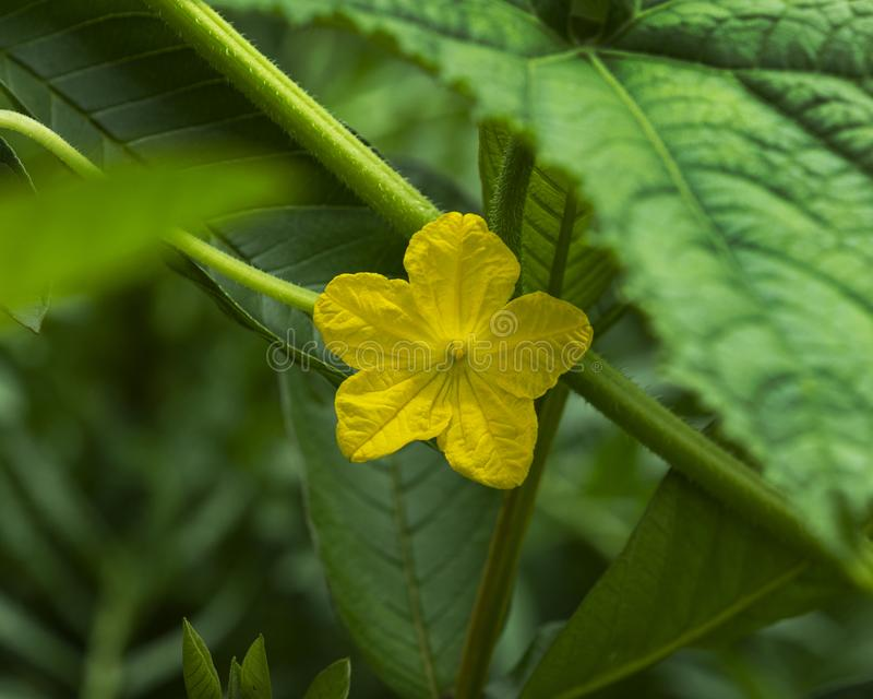 Yellow Flower on green leaves Background royalty free stock photography