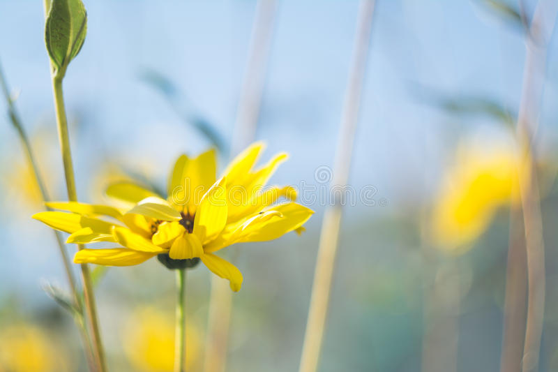 Yellow Flower With Green Leaves Tilt Shift Lens Photography Free Public Domain Cc0 Image