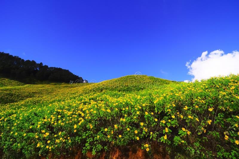 Yellow flower hill stock photo