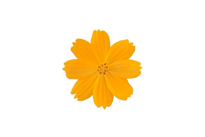 Yellow flower isolated on white background. Beautiful Yellow flower isolated on white background stock photos