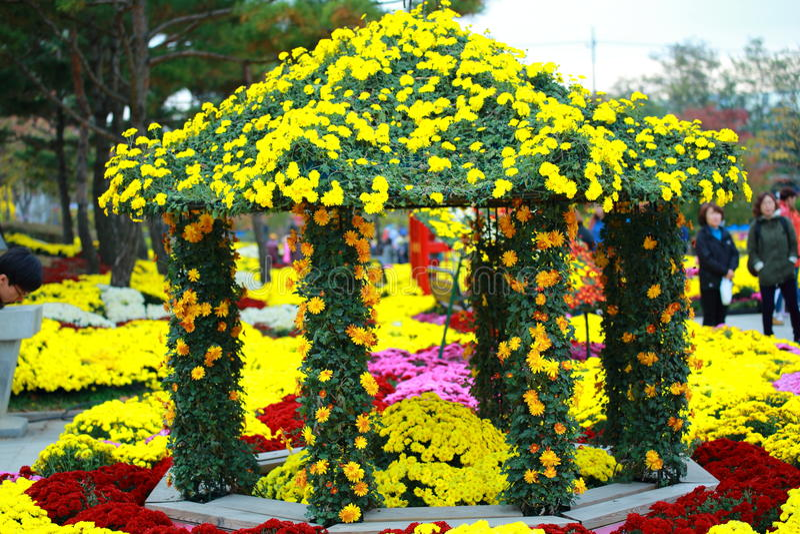 Yellow flower look fresh in flower festival stock image