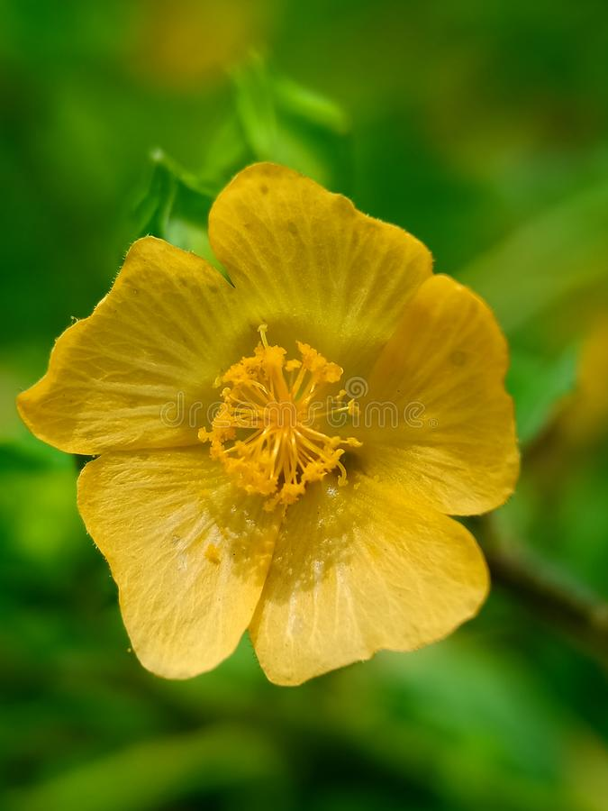 Yellow flower with macro shoot royalty free stock images