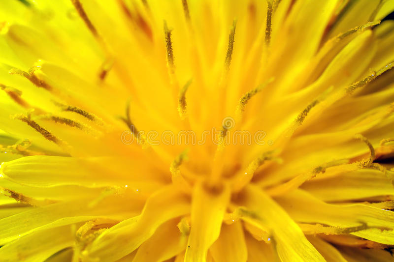 Yellow flower. Macro shot of a vivid yellow flower royalty free stock photography