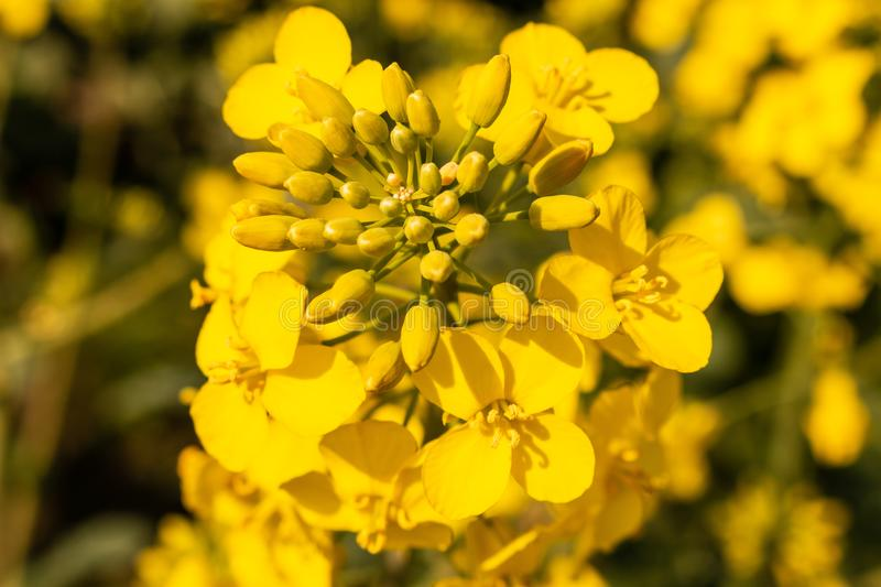 Yellow flower in meadow. stock photography