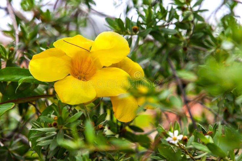 Yellow flower on natural background. stock photos