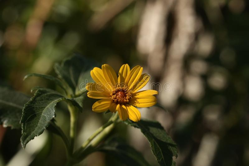 Yellow flower is a nice view stock photography