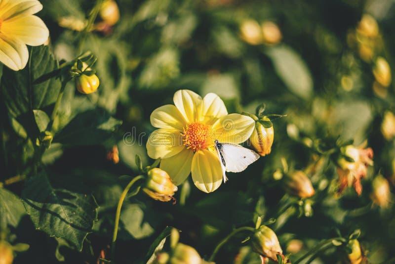 Yellow Flower Plant in Macro Shot stock photos
