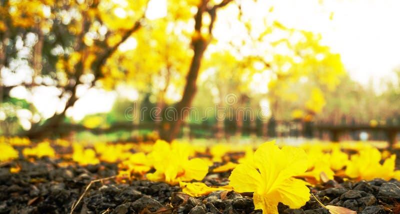 Yellow flower at pongsawat school stock image